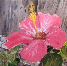"""Hibiscus (2017) - 6x6"""", oil on canvas (gifted)"""