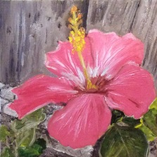 "Hibiscus (2017) - 6x6"", oil on canvas (gifted)"
